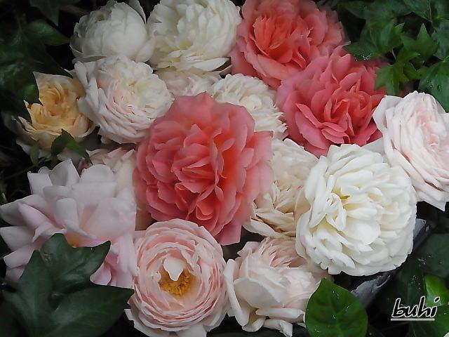昨年のバラ達