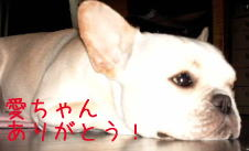 frenchbulldog 愛