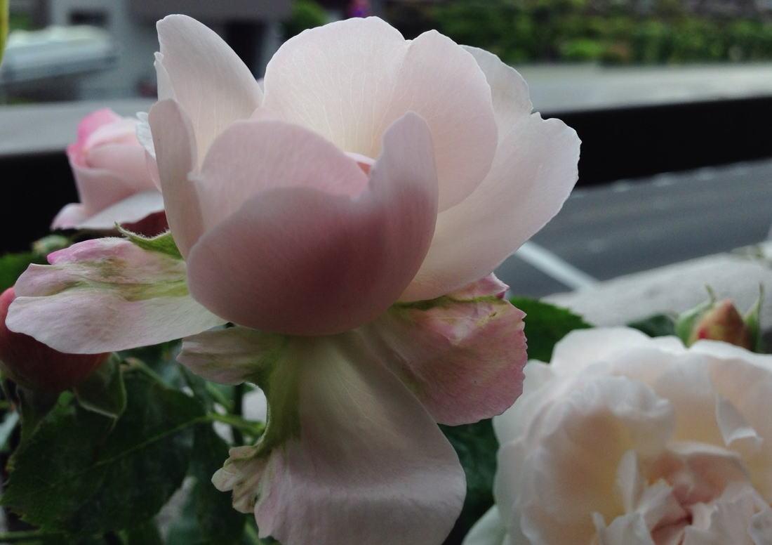 2015/05/02 ルドゥテ(ER)【完全無農薬栽培】